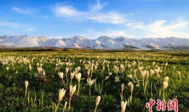 """新疆那拉提景區推出""""惠玩""""大禮包"""