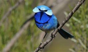 《地理中國》 百年地理大發現 鳥之謎