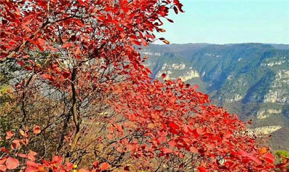 河南焦作:青天河紅葉美了生態 富了百姓